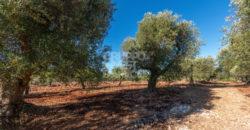 Vendita terreno – Contrada Badessa, Ostuni (Brindisi)