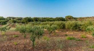 Vendita terreno – Contrada Satia, Ostuni (Brindisi)