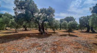 Vendita terreno – Contrada Zampignola, Ostuni (Brindisi)