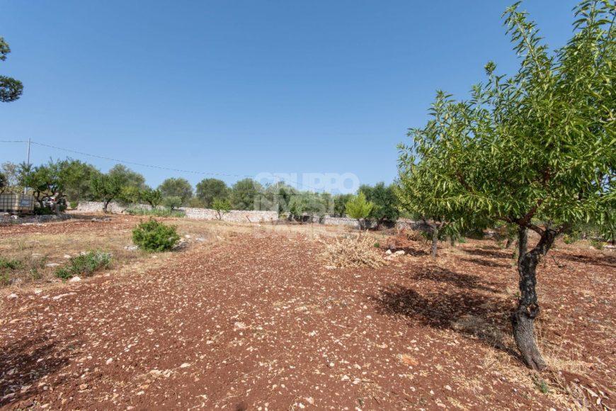 Vendita terreno – Contrada Cavallerizza, Ostuni (Brindisi)
