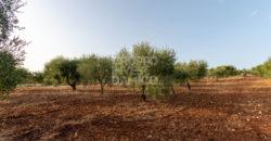 Vendita terreno – Contrada Giovanni Fasano, Ostuni (Brindisi)