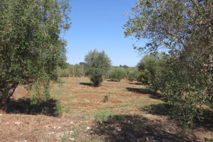 Vendita Casolari e lamie – Contrada Tarturiello, Valle D'Itria – Alto Salento, Ceglie Messapica (Brindisi)