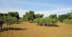 Vendita Zona mare terreno – Strada Savelletri , Alto Salento, Torre Canne (Brindisi)