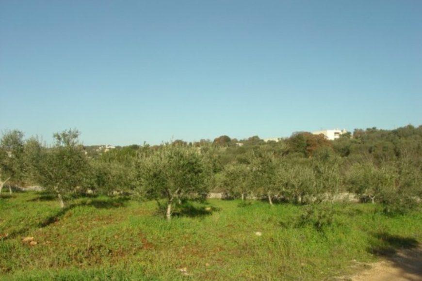 Vendita terreno – Contrada Femminamorta , Cisternino (Brindisi)