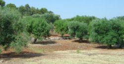 Vendita Trulli e lamie rustici – Contrada Tirunno, Valle D'Itria – Alto Salento, Cisternino (Brindisi)