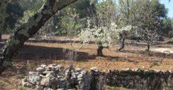 Vendita Trulli e lamie rustici – Contrada Semerano, Valle D'Itria – Alto Salento, Ceglie Messapica (Brindisi)