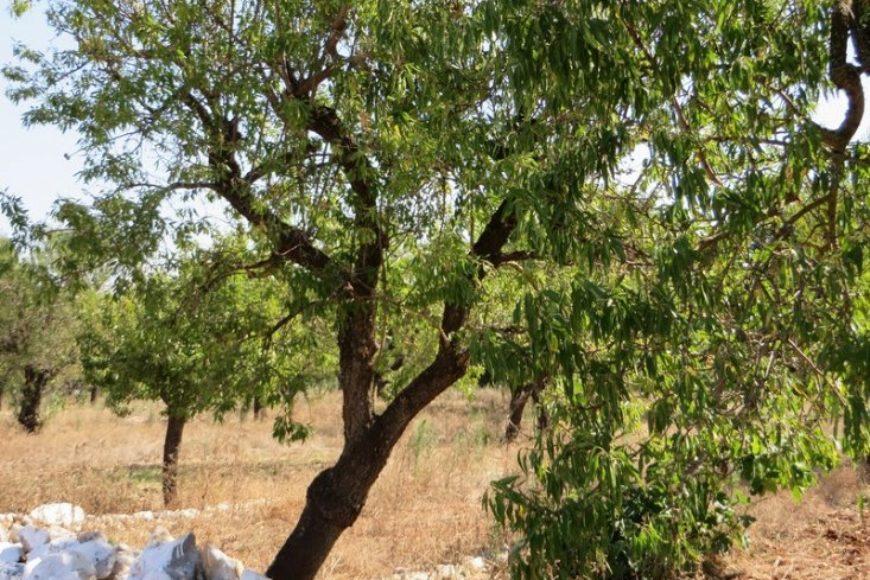 Vendita terreno – Contrada Tarturiello, Valle D'Itria – Alto Salento, Ceglie Messapica (Brindisi)